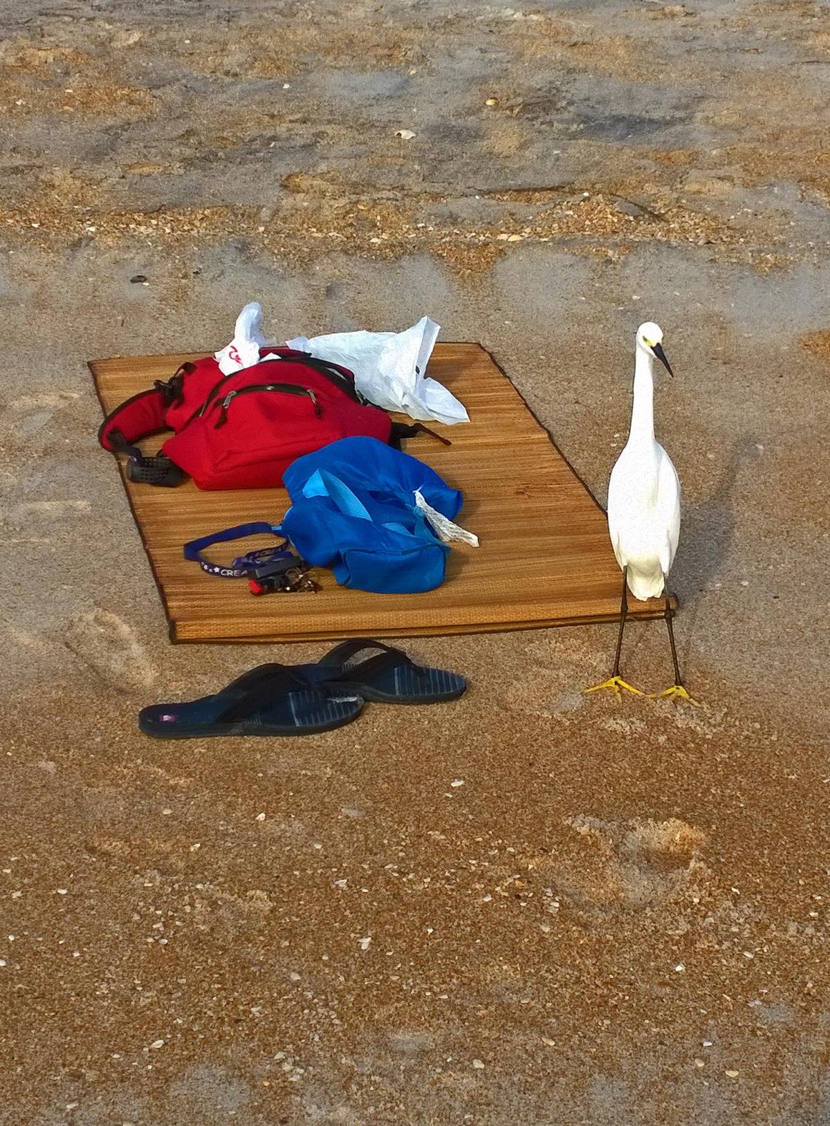 Egret-motherJPEG1-cropped for card